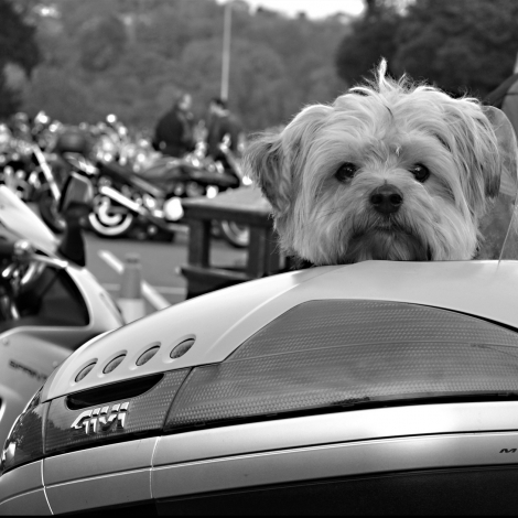 VoorElkaar met Bikers For Animals